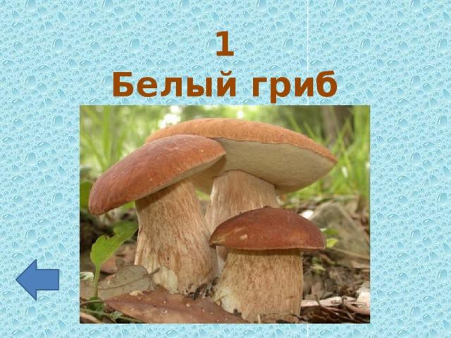 1 Белый гриб