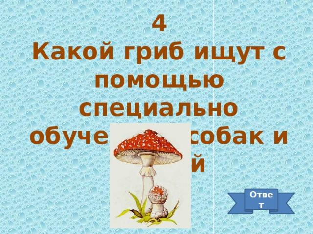 4 Какой гриб ищут с помощью специально обученных собак и свиней Ответ