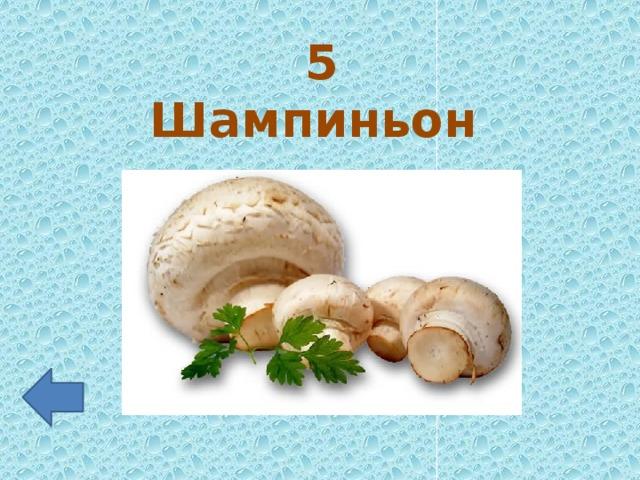 5 Шампиньон