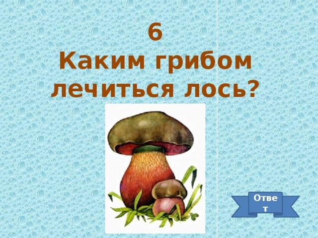 6 Каким грибом лечиться лось? Ответ