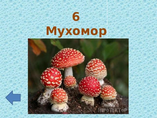 6 Мухомор