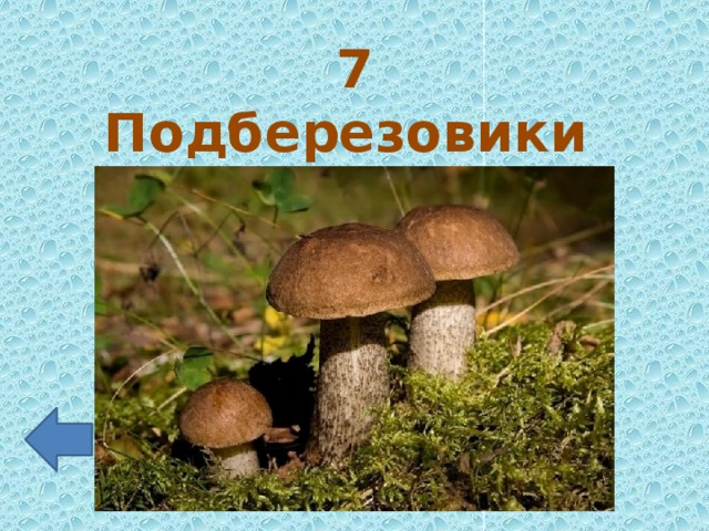 7 Подберезовики