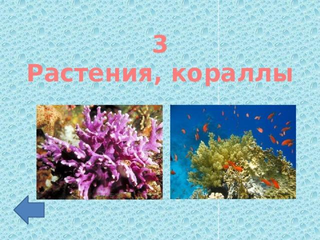 3 Растения, кораллы