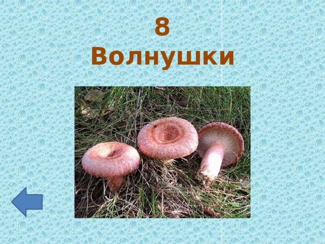 8 Волнушки