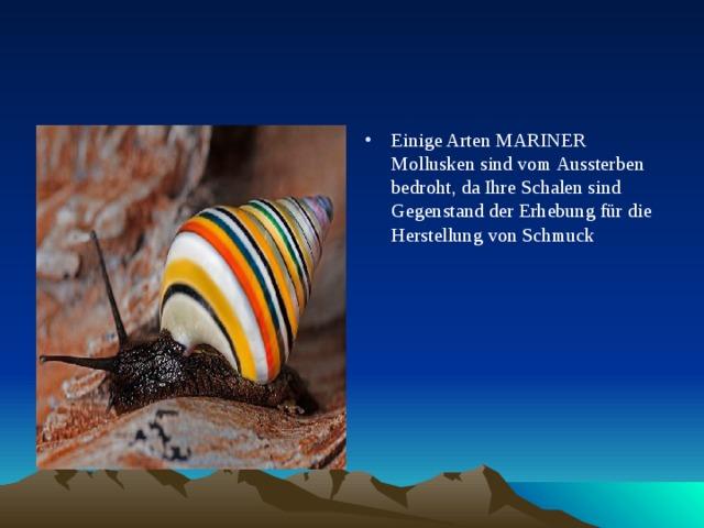Einige Arten MARINER Mollusken sind vom Aussterben bedroht, da Ihre Schalen sind Gegenstand der Erhebung für die Herstellung von Schmuck