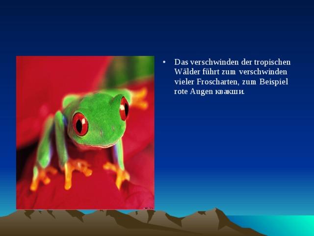 Das verschwinden der tropischen Wälder führt zum verschwinden vieler Froscharten, zum Beispiel rote Augen квакши.