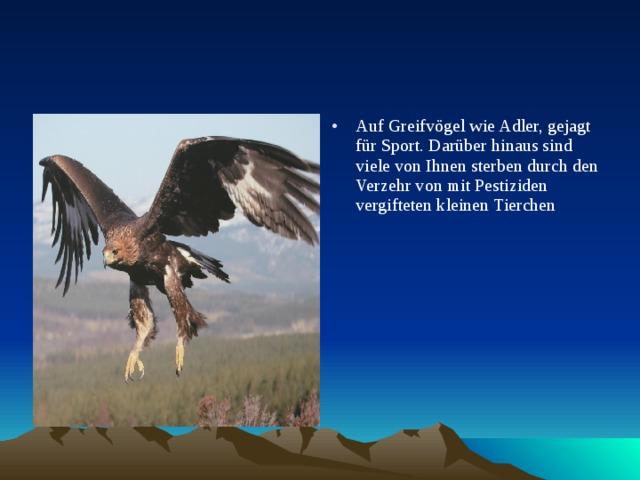 Auf Greifvögel wie Adler, gejagt für Sport. Darüber hinaus sind viele von Ihnen sterben durch den Verzehr von mit Pestiziden vergifteten kleinen Tierchen