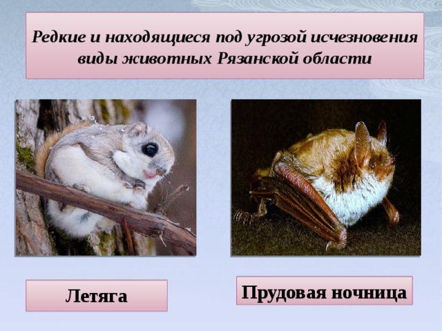 Редкие и находящиеся под угрозой исчезновения виды животных Рязанской области Прудовая ночница Летяга