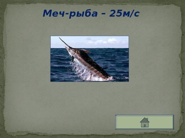 Меч-рыба – 25м/с