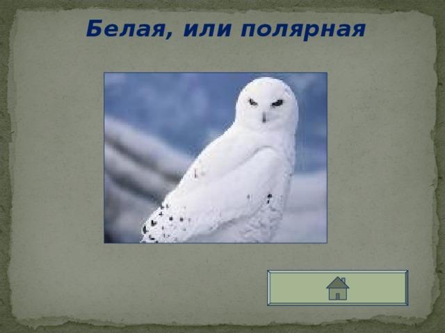 Белая, или полярная
