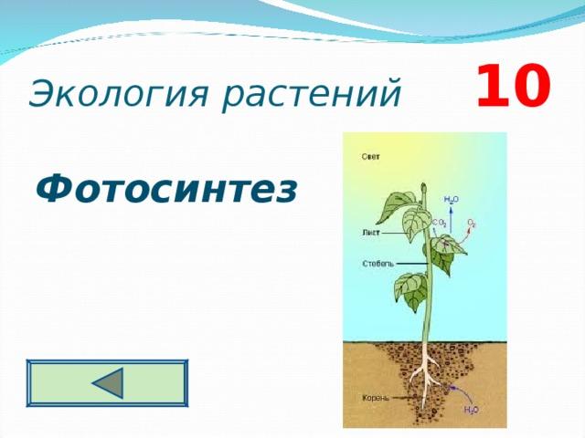 Экология растений 10 Фотосинтез