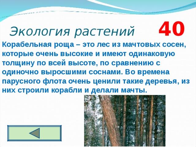 Экология растений 4 0 Корабельная роща – это лес из мачтовых сосен, которые очень высокие и имеют одинаковую толщину по всей высоте, по сравнению с одиночно выросшими соснами. Во времена парусного флота очень ценили такие деревья, из них строили корабли и делали мачты.
