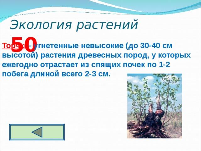 Экология растений 5 0 Торчки - угнетенные невысокие (до 30-40 см высотой) растения древесных пород, у которых ежегодно отрастает из спящих почек по 1-2 побега длиной всего 2-3 см.