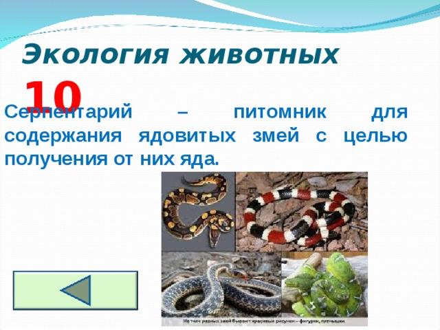 Экология животных  10 Серпентарий – питомник для содержания ядовитых змей с целью получения от них яда.