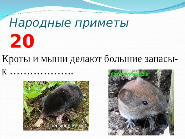 Народные приметы 2 0 Кроты и мыши делают большие запасы- к ……………….