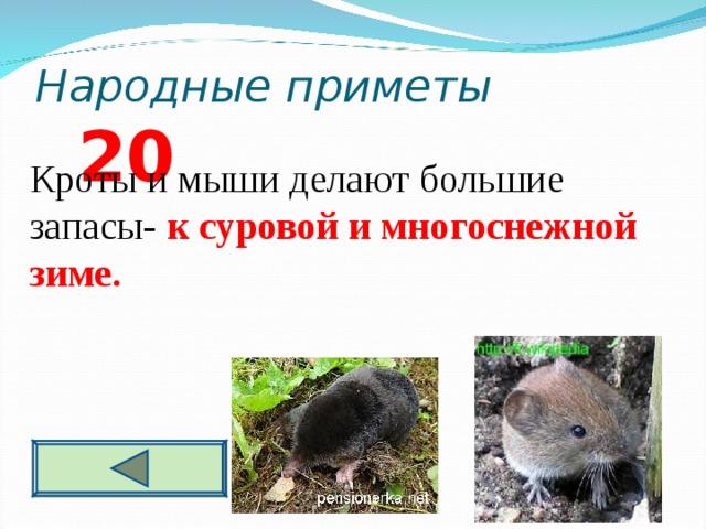 Народные приметы 2 0 Кроты и мыши делают большие запасы- к суровой и многоснежной зиме.