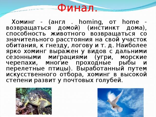 Финал.   Хоминг - (англ . homing, от home - возвращаться домой) (инстинкт дома), способность животного возвращаться со значительного расстояния на свой участок обитания, к гнезду, логову и т. д. Наиболее ярко хоминг выражен у видов с дальними сезонными миграциями (угри, морские черепахи, многие проходные рыбы и перелетные птицы). Выработанный путем искусственного отбора, хоминг в высокой степени развит у почтовых голубей.