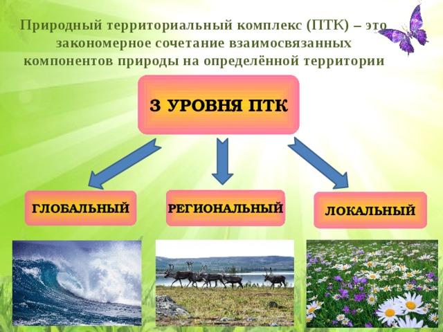Природный территориальный комплекс (ПТК) – это закономерное сочетание взаимосвязанных компонентов природы на определённой территории 3 УРОВНЯ ПТК РЕГИОНАЛЬНЫЙ ГЛОБАЛЬНЫЙ ЛОКАЛЬНЫЙ