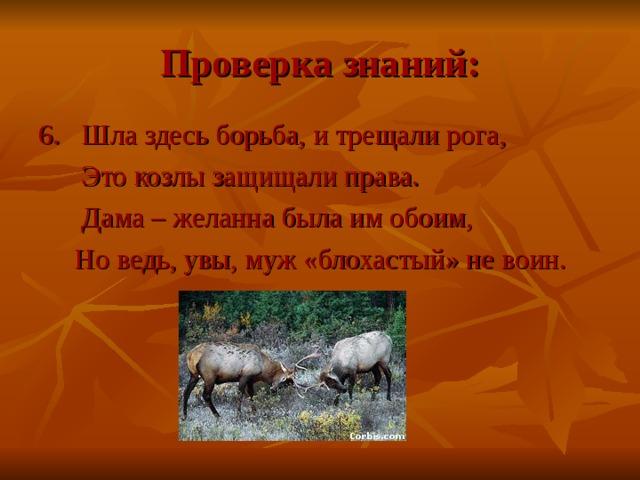 Проверка знаний: 6. Шла здесь борьба, и трещали рога,  Это козлы защищали права.  Дама – желанна была им обоим,  Но ведь, увы, муж «блохастый» не воин.