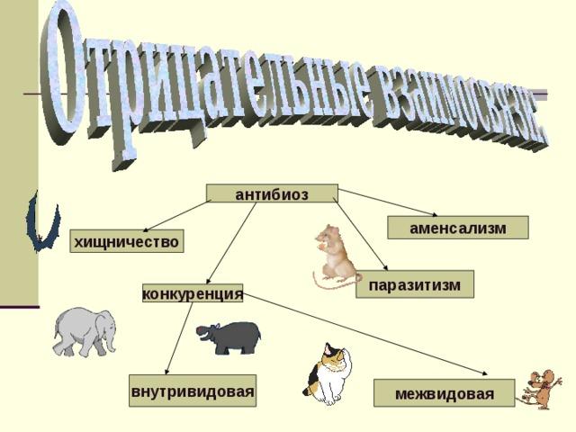 антибиоз аменсализм хищничество паразитизм конкуренция внутривидовая межвидовая