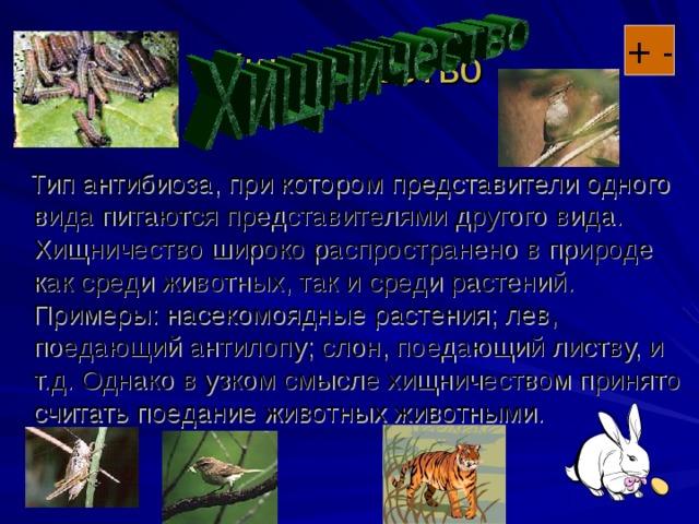 Хищничество + -  Тип антибиоза, при котором представители одного вида питаются представителями другого вида. Хищничество широко распространено в природе как среди животных, так и среди растений. Примеры: насекомоядные растения; лев, поедающий антилопу; слон, поедающий листву, и т.д. Однако в узком смысле хищничеством принято считать поедание животных животными.