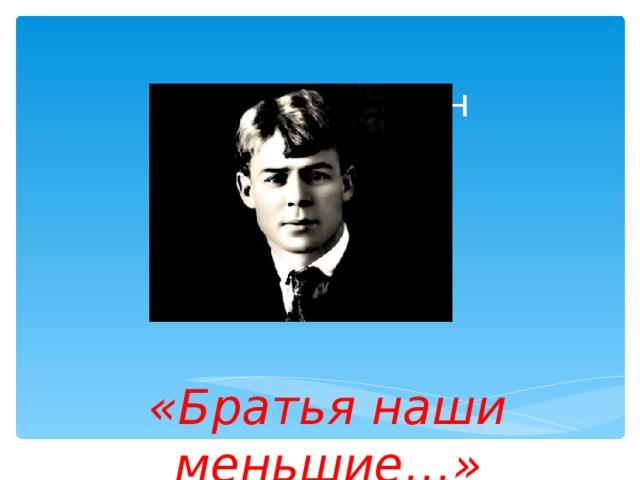 Сергей Есенин  «Братья наши меньшие…»