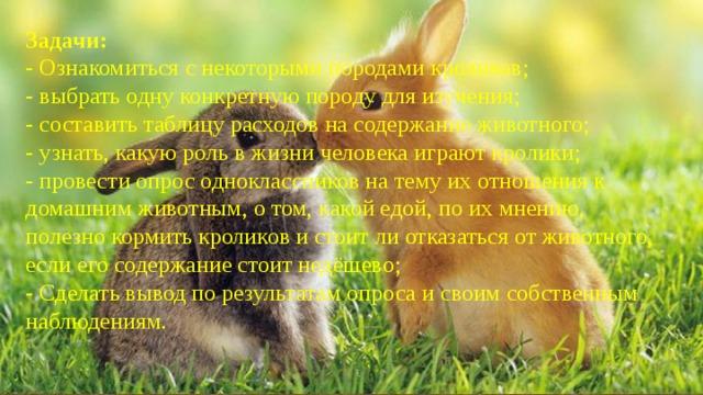 Задачи: - Ознакомиться с некоторыми породами кроликов; - выбрать одну конкретную породу для изучения; - составить таблицу расходов на содержание животного; - узнать, какую роль в жизни человека играют кролики; - провести опрос одноклассников на тему их отношения к домашним животным, о том, какой едой, по их мнению, полезно кормить кроликов и стоит ли отказаться от животного, если его содержание стоит недёшево; - Сделать вывод по результатам опроса и своим собственным наблюдениям.