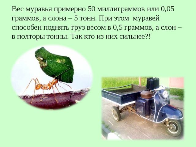 Вес муравья примерно 50 миллиграммов или 0,05 граммов, а слона – 5 тонн. При этом муравей способен поднять груз весом в 0,5 граммов, а слон – в полторы тонны. Так кто из них сильнее?!