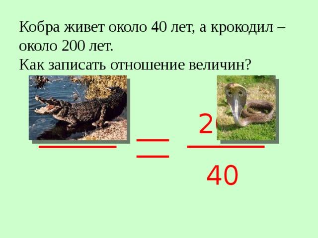 Кобра живет около 40 лет, а крокодил – около 200 лет.  Как записать отношение величин? 200 40