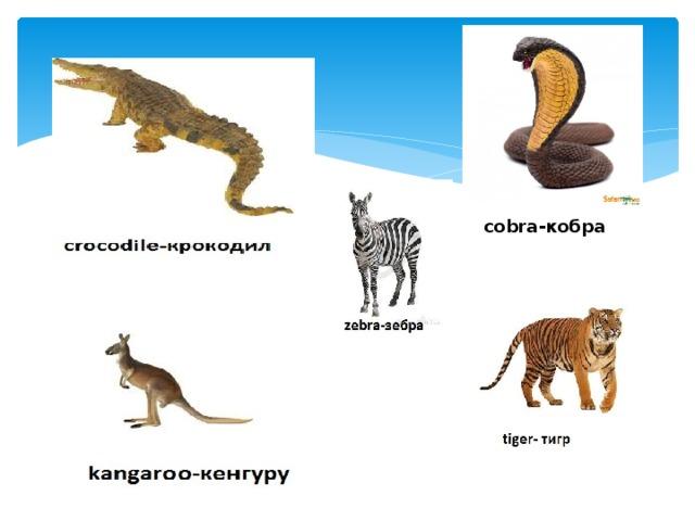 сobra -кобра