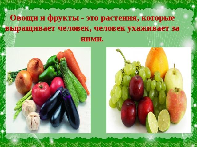 Овощи и фрукты - это растения, которые выращивает человек, человек ухаживает за ними.