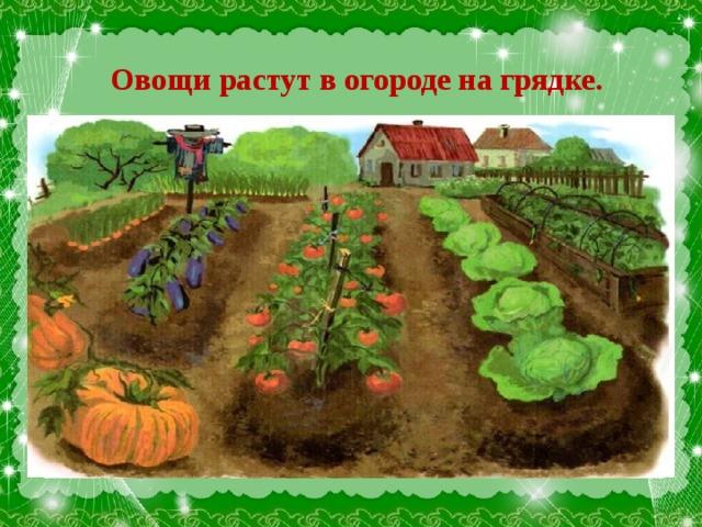 Овощи растут в огороде на грядке .