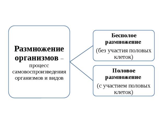 Размножение организмов – процесс самовоспроизведения организмов и видов Бесполое размножение (без участия половых клеток) Половое размножение (с участием половых клеток)