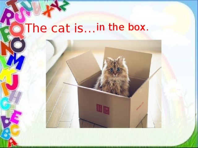 The cat is… in the box.