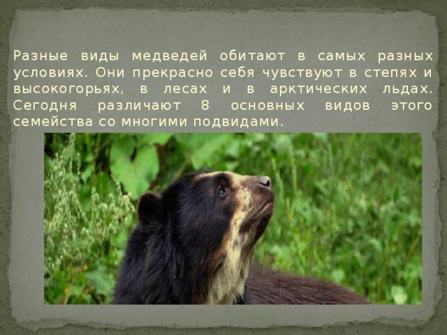 Разные виды медведей обитают в самых разных условиях. Они прекрасно себя чувствуют в степях и высокогорьях, в лесах и в арктических льдах. Сегодня различают 8 основных видов этого семейства со многими подвидами.
