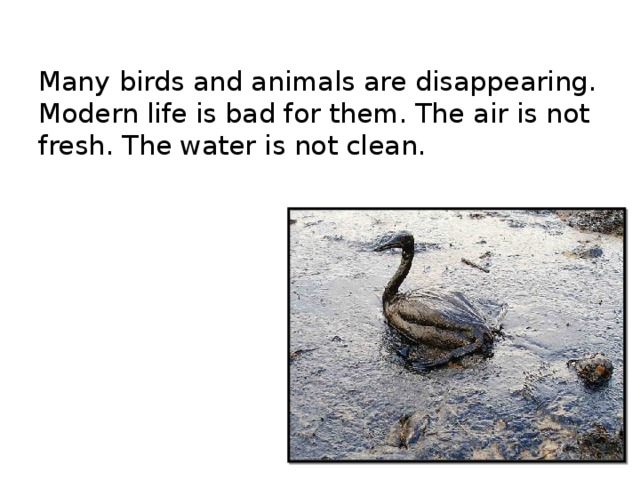 Many birds and animals are disappearing.  Modern life is bad for them. The air is not fresh. The water is not clean.