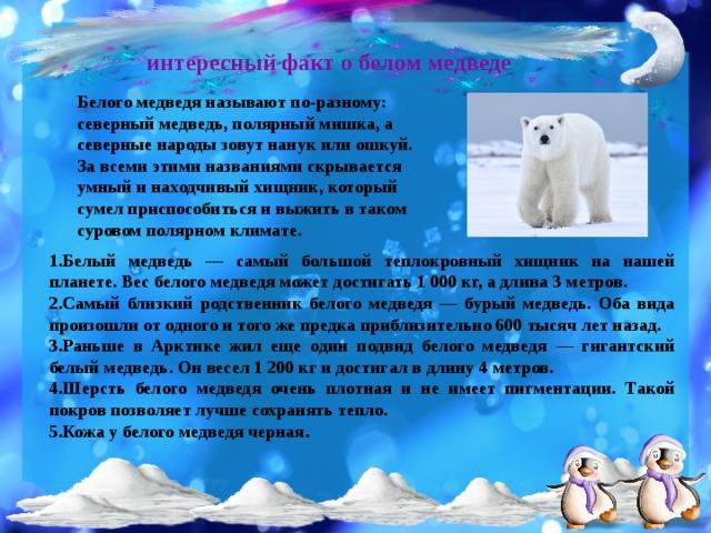 интересный факт о белом медведе Белого медведя называют по-разному: северный медведь, полярный мишка, а северные народы зовут нанук или ошкуй. За всеми этими названиями скрывается умный и находчивый хищник, который сумел приспособиться и выжить в таком суровом полярном климате.