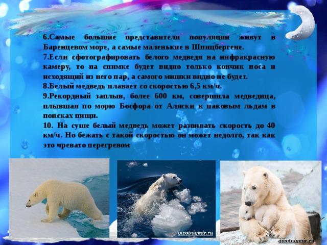 6.Самые большие представители популяции живут в Баренцевом море, а самые маленькие в Шпицбергене. 7.Если сфотографировать белого медведя на инфракрасную камеру, то на снимке будет видно только кончик носа и исходящий из него пар, а самого мишки видно не будет. 8.Белый медведь плавает со скоростью 6,5 км/ч. 9.Рекордный заплыв, более 600 км, совершила медведица, плывшая по морю Босфора от Аляски к паковым льдам в поисках пищи. 10.  На суше белый медведь может развивать скорость до 40 км/ч. Но бежать с такой скоростью он может недолго, так как это чревато перегревом