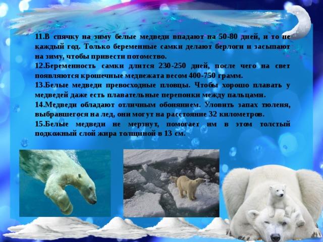 11.В спячку на зиму белые медведи впадают на 50-80 дней, и то не каждый год. Только беременные самки делают берлоги и засыпают на зиму, чтобы привести потомство. 12.Беременность самки длится 230-250 дней, после чего на свет появляются крошечные медвежата весом 400-750 грамм. 13.Белые медведи превосходные пловцы. Чтобы хорошо плавать у медведей даже есть плавательные перепонки между пальцами. 14.Медведи обладают отличным обонянием. Уловить запах тюленя, выбравшегося на лед, они могут на расстояние 32 километров. 15.Белые медведи не мерзнут, помогает им в этом толстый подкожный слой жира толщиной в 13 см.