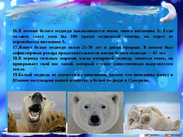 16.В печени белого медведя накапливается очень много витамина A. Если человек съест хотя бы 100 грамм медвежьей печени, он умрет от переизбытка витамина A. 17.Живут белые медведи около 25-30 лет в дикой природе. В неволе был зафиксирован рекорд продолжительности жизни белого медведя — 45 лет. 18.В период сильных морозов, когда полярный медведь ложится спать, он прикрывает свой нос лапой, который служит единственным выделителем тепла. 19.Белый медведь не охотится на пингвинов, потому что пингвины живут в Южном полушарии нашей планеты, а белые медведи в Северном.