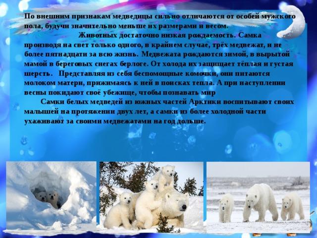 По внешним признакам медведицы сильно отличаются от особей мужского пола, будучи значительно меньше их размерами и весом.  Животных достаточно низкая рождаемость. Самка производя на свет только одного, в крайнем случае, трёх медвежат, и не более пятнадцати за всю жизнь.  Медвежата рождаются зимой, в вырытой мамой в береговых снегах берлоге. От холода их защищает тёплая и густая шерсть.  Представляя из себя беспомощные комочки, они питаются молоком матери, прижимаясь к ней в поисках тепла. А при наступлении весны покидают своё убежище, чтобы познавать мир Самки белых медведей из южных частей Арктики воспитывают своих малышей на протяжении двух лет, а самки из более холодной части ухаживают за своими медвежатами на год дольше.