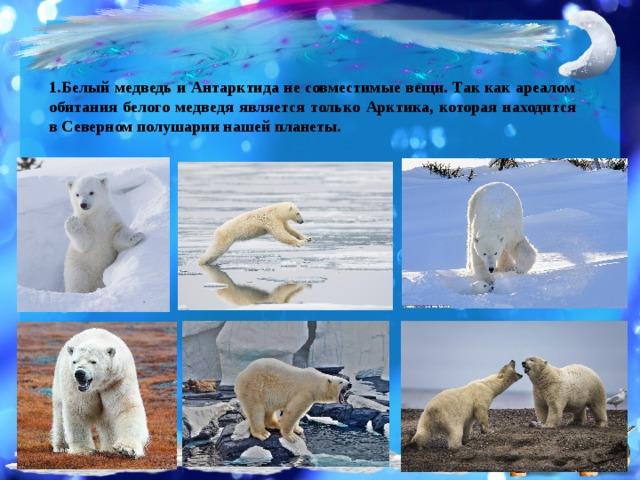 Белый медведь и Антарктида не совместимые вещи. Так как ареалом обитания белого медведя является только Арктика, которая находится в Северном полушарии нашей планеты.