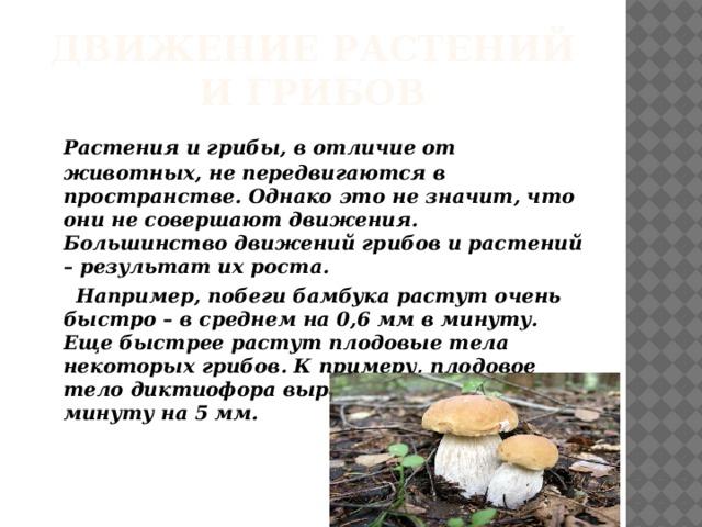 Движение растений и грибов   Растения и грибы, в отличие от животных, не передвигаются в пространстве. Однако это не значит, что они не совершают движения. Большинство движений грибов и растений – результат их роста.  Например, побеги бамбука растут очень быстро – в среднем на 0,6 мм в минуту. Еще быстрее растут плодовые тела некоторых грибов. К примеру, плодовое тело диктиофора вырастает за одну минуту на 5 мм.