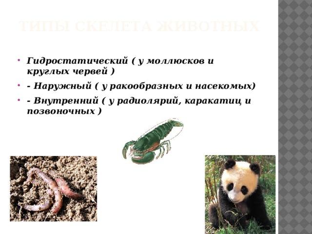 Типы скелета животных