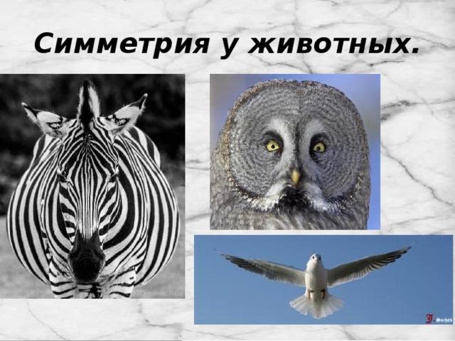 Симметрия у животных.