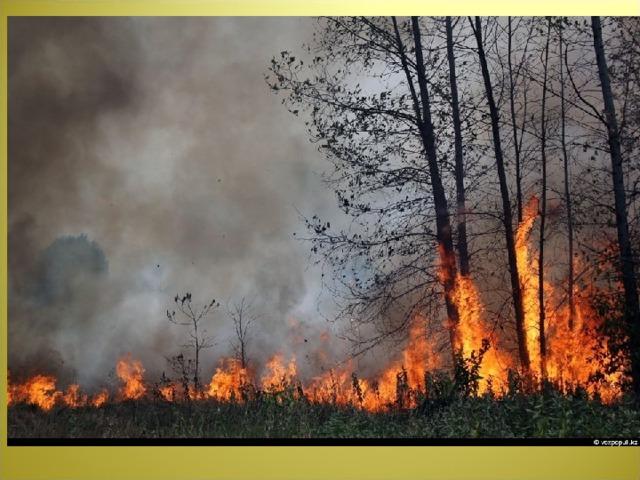 Чтобы лес - звериный дом,  Не пылал нигде огнём,  Чтоб не плакали букашки,  Не теряли гнёзда пташки,  А лишь пели песни птички,  Не берите в руки спички!
