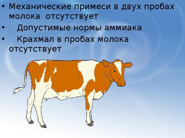 Механические примеси в двух пробах молока отсутствует  Допустимые нормы аммиака  Крахмал в пробах молока отсутствует