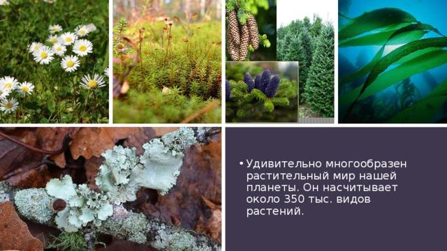 Удивительно многообразен растительный мир нашей планеты. Он насчитывает около 350 тыс. видов растений.