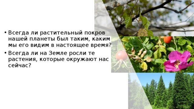 Всегда ли растительный покров нашей планеты был таким, каким мы его видим в настоящее время? Всегда ли на Земле росли те растения, которые окружают нас сейчас?