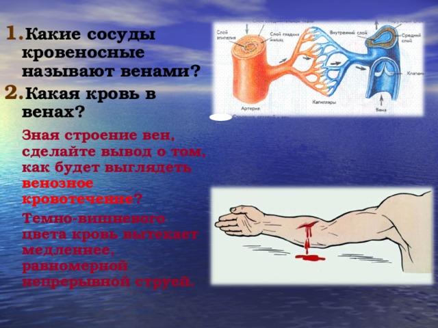 Какие сосуды кровеносные называют венами? Какая кровь в венах?